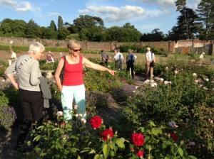 The Walled Garden Croome Court Jul15